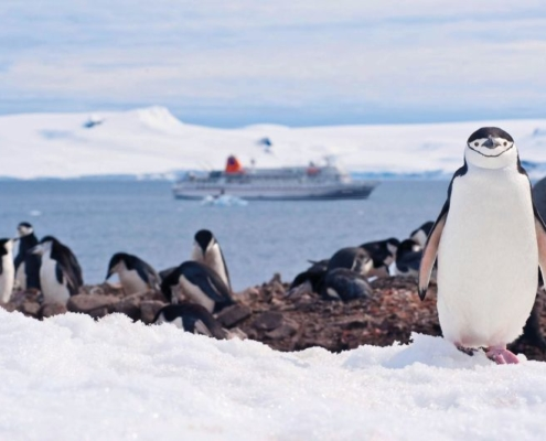 HAPAG-LLOYD CRUISES MS Bremen Antarktis